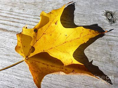 Photograph - Yellow Maple Leaf by Cristina Stefan