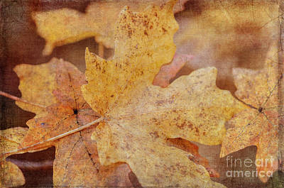 Photograph - Yellow Maple Leaves by Tamara Becker