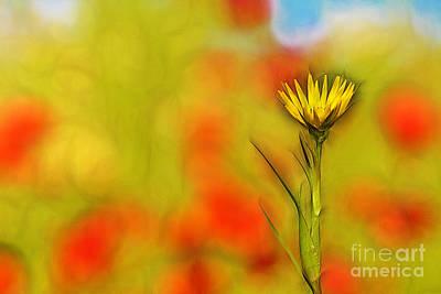Yellow Meadow Flowers Art Print by Odon Czintos