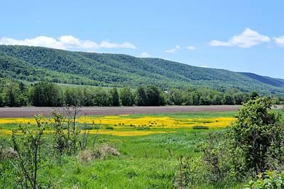 Photograph - Yellow Meadow Mountain View by Joel E Blyler