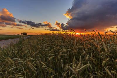 Yellow Meadow Under Sunset Sky With Clouds IIi Art Print by Aldona Pivoriene