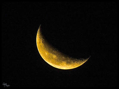 Photograph - Yellow Moon by Glenn Feron