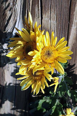Photograph - Yellow Mum by Kristy Jeppson