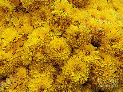 Photograph - Yellow Mums The Word by Paul Mashburn