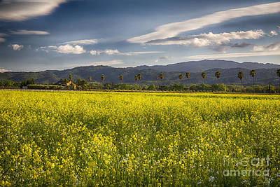 Yellow Mustard And Palm Trees In Napa Valley Art Print