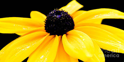 Photograph - Yellow Not Mellow by Susan Parish