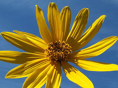 Photograph - Yellow On Blue by Gene Cyr