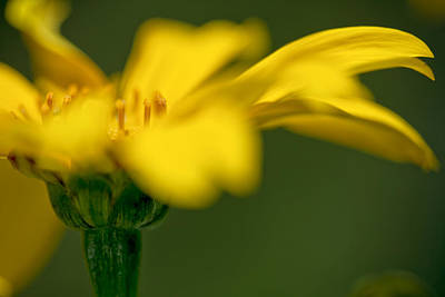 Photograph - Yellow On Green by Al Hurley