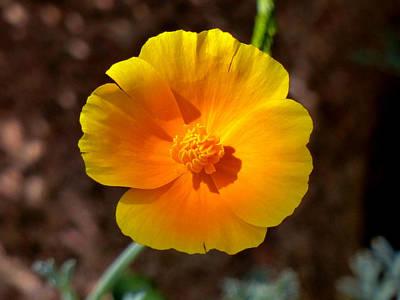 Photograph - Yellow On Yellow by Thomas Samida