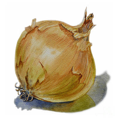 Vegetables Painting - Yellow Onion by Irina Sztukowski