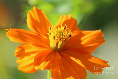 Photograph - Yellow Orange At An Angle by Jackie Farnsworth