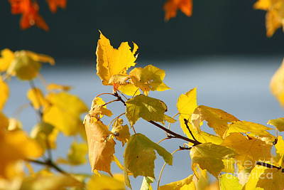 School Tote Bags Royalty Free Images - Autumn Orange Yellow  Royalty-Free Image by Neal Eslinger