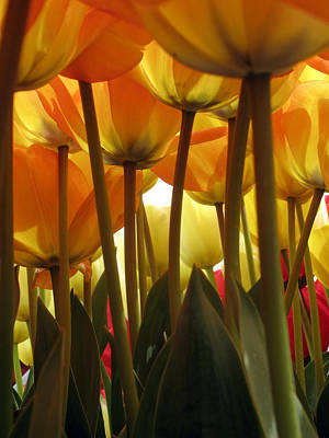 Photograph - Yellow-orange Lights by Lisa Foster