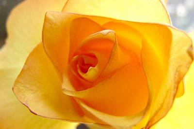 Photograph - Yellow Orange Rose by Marilyn Burton