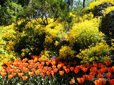 Art Print featuring the photograph Yellow Orange - Springtime by Phil Banks
