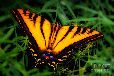 Photograph - Yellow Orange Tiger Swallowtail Butterfly by Jerry Cowart