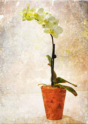 Art Print featuring the photograph Yellow Orchid by Patti Deters