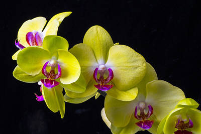 Pretty Orchid Photograph - Yellow Orchids by Garry Gay