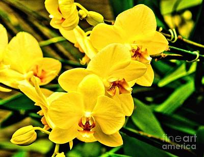 Photograph - Yellow Orchids by Nick Zelinsky