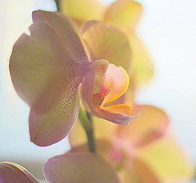 Stamen Digital Art - Yellow Orchids Phalaenopsis I by Rosemarie E Seppala