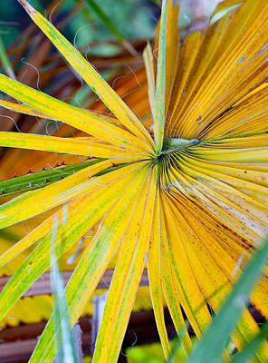 Photograph - Yellow Palm 1 by Stephen Anderson