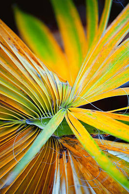 Photograph - Yellow Palm 2 by Stephen Anderson