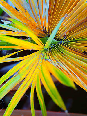Photograph - Yellow Palm 3 by Stephen Anderson