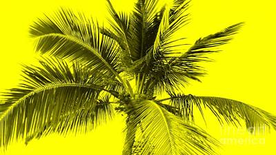 Yellow Photograph - Yellow Palm by Timothy Curtin