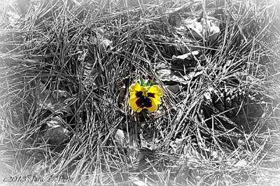 Art Print featuring the photograph Yellow Pansy by Tara Potts