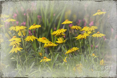 Flower Photograph - Yellow Paper Daisies by Carole Lloyd