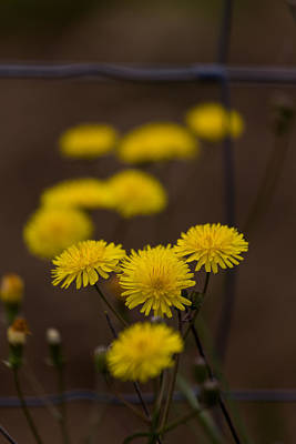 Photograph - Yellow Poem by Edgar Laureano