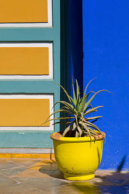 Photograph - Yellow Pot  by Mick House