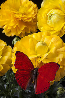 Yellow Ranunculus And Red Butterfly Print by Garry Gay