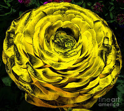 Bloom Photograph - Yellow Ranunculus Flower With Chrome Effect by Rose Santuci-Sofranko