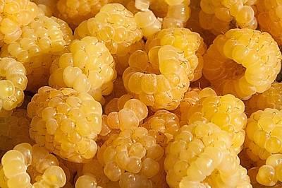 Ripe Photograph - Yellow Raspberry Abstract by Stuart Litoff