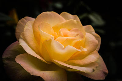 Photograph - Yellow Ray Of Sunshine by Jeff Folger