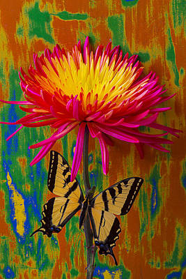 Beautiful Butterfly Photograph - Yellow Red Mum With Yellow Black Butterfly by Garry Gay