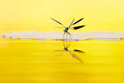 Damselflies Photograph - Yellow River by Roeselien Raimond