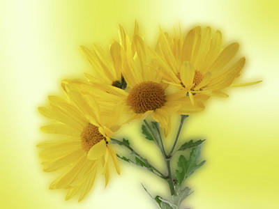 Photograph - Yellow  by Ron Roberts
