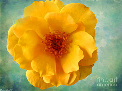 Photograph - Yellow Rose 2  by Debbie Portwood