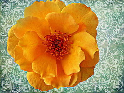 Photograph - Yellow Rose 8  by Debbie Portwood