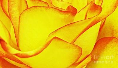 Photograph - Yellow Rose Abstract by Sarah Loft