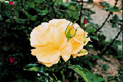 Yellow Rose And Bud Art Print by Christopher Bage