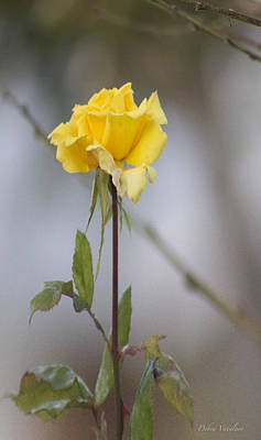 Photograph - Yellow Rose by Debra     Vatalaro