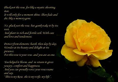 Photograph - Yellow Rose Greeting Card With Verse - Pluck Not The Rose by Taiche Acrylic Art