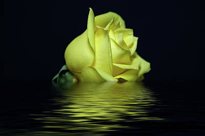 Yellow Rose II Art Print by Sandy Keeton