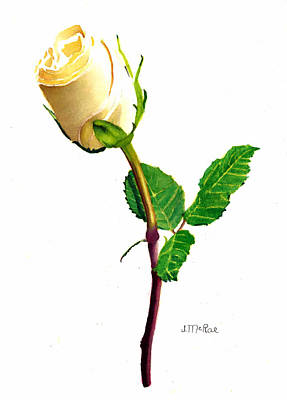 Painting - Yellow Rose by June McRae