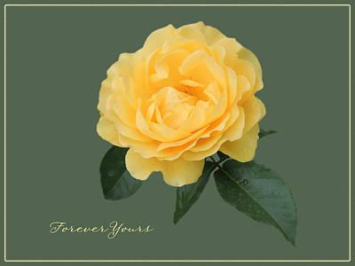 Yellow Rose Of Love Art Print