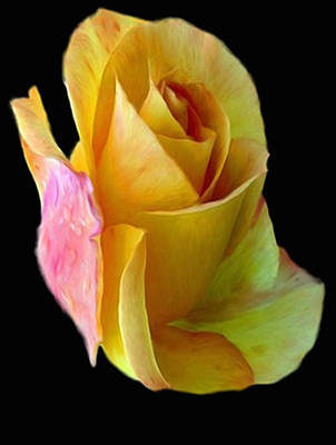 Painting - Yellow Rose Of Texas by Dennis Buckman