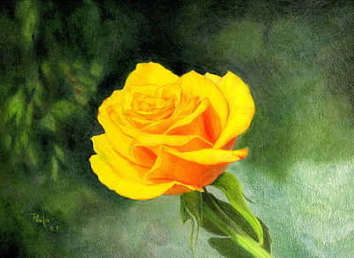 Color Pencil Drawing - Yellow Rose by Paul Petro